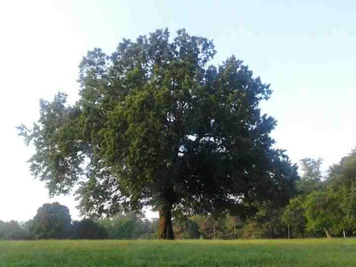 2012-11-02-treewhole.jpg