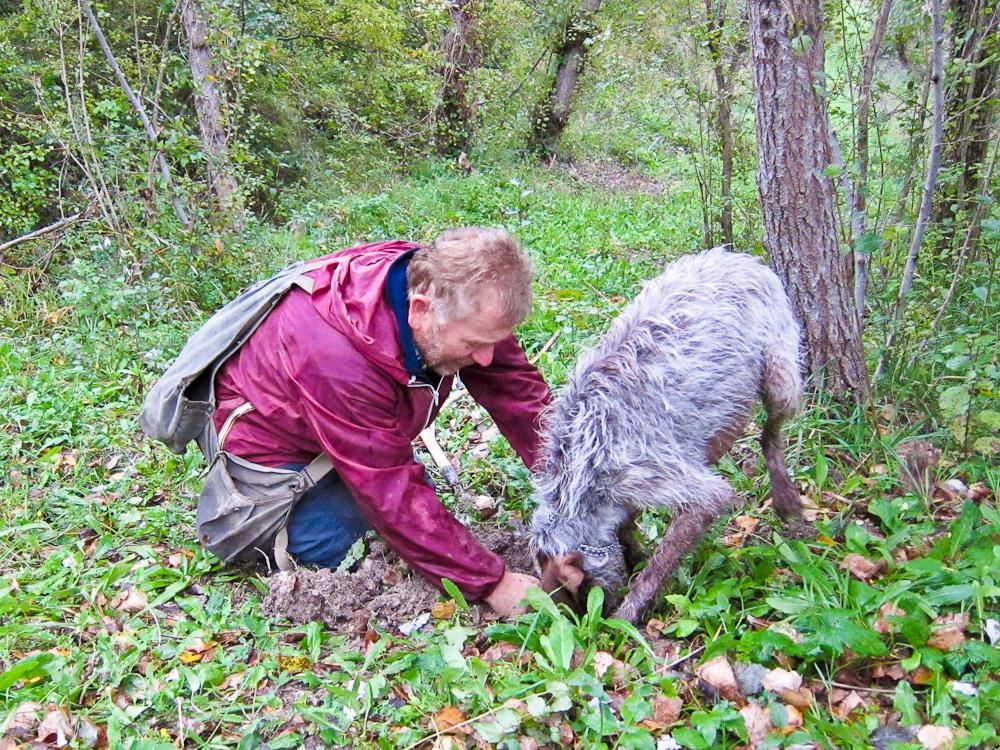 2012-11-03-Hunteranddogdig.jpg