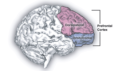 2012-11-04-Prefrontal_cortex.png