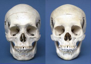 2012-11-06-Skulls1.png