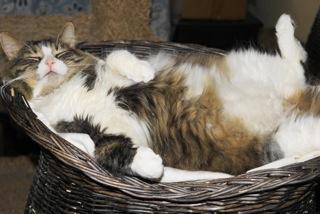2012-11-06-cat.jpg