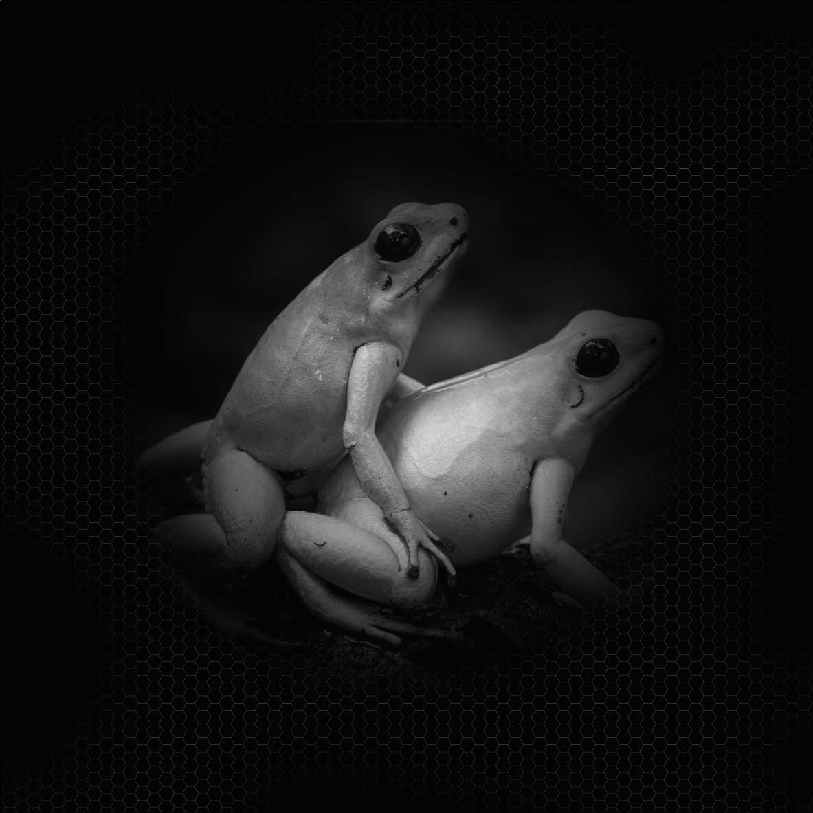 2012-11-07-BdS.FROGS.EPPDCSI.SexualNature.jpg