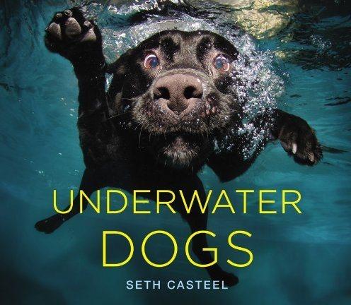 2012-11-07-underwaterdogs.jpg