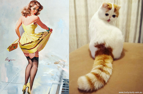 2012-11-08-catspinups.jpg