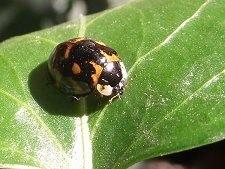 2012-11-13-ladybug.jpg
