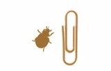 2012-11-13-sizeladybug1602771cb1344953254.jpg