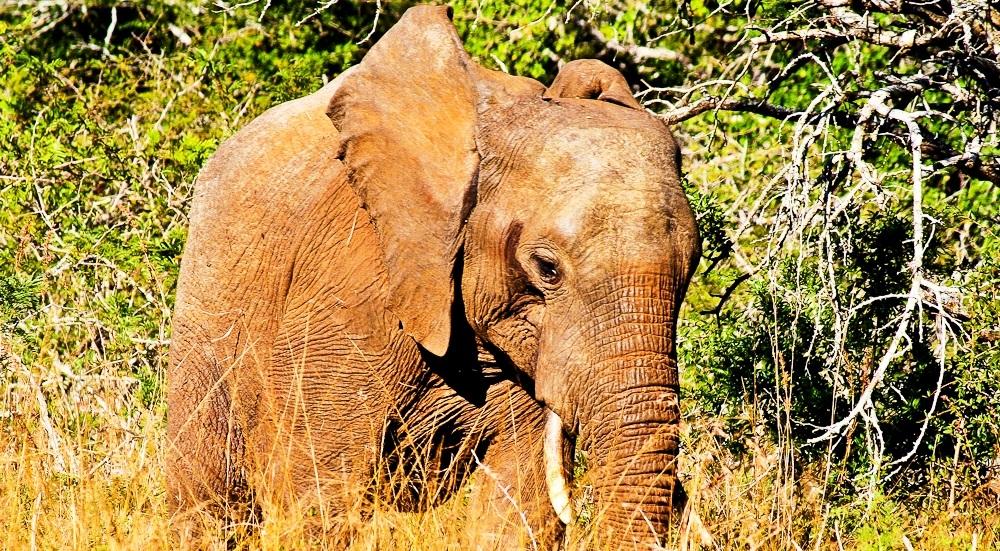 2012-11-14-ElephantintheBush.jpg