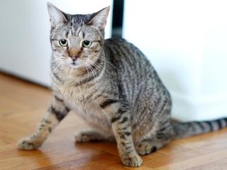 2012-11-14-cat1.jpg