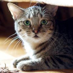2012-11-14-cat2.jpg