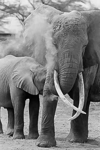 2012-11-21-ElephantChristo__Wilkinson.jpg