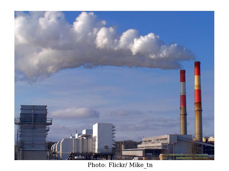 2012-11-21-Plant_coal.jpg