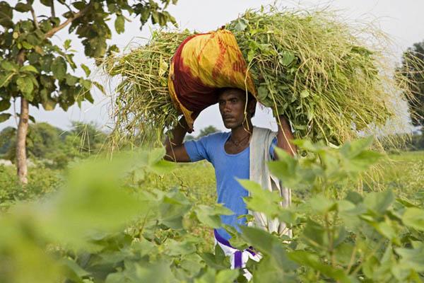 Essay on plight of indian farmers