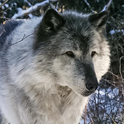 2012-11-21-WolfJami_Wright.jpg