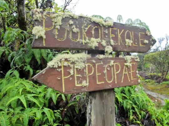 2012-11-28-MolokaiForestReserve.jpg