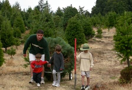 2012-11-28-christmastree.jpg