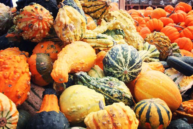 2012-11-29-JeanTalonMarketassortedsquash.jpg