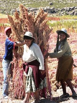2012-11-30-quinoa.jpg
