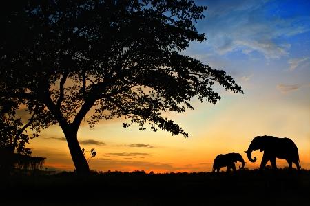 2012-12-03-Serengeti.jpg