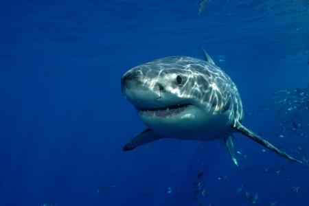 2012-12-03-Shark.jpg