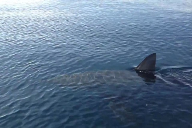 2012-12-04-sharkfinpicture.JPG