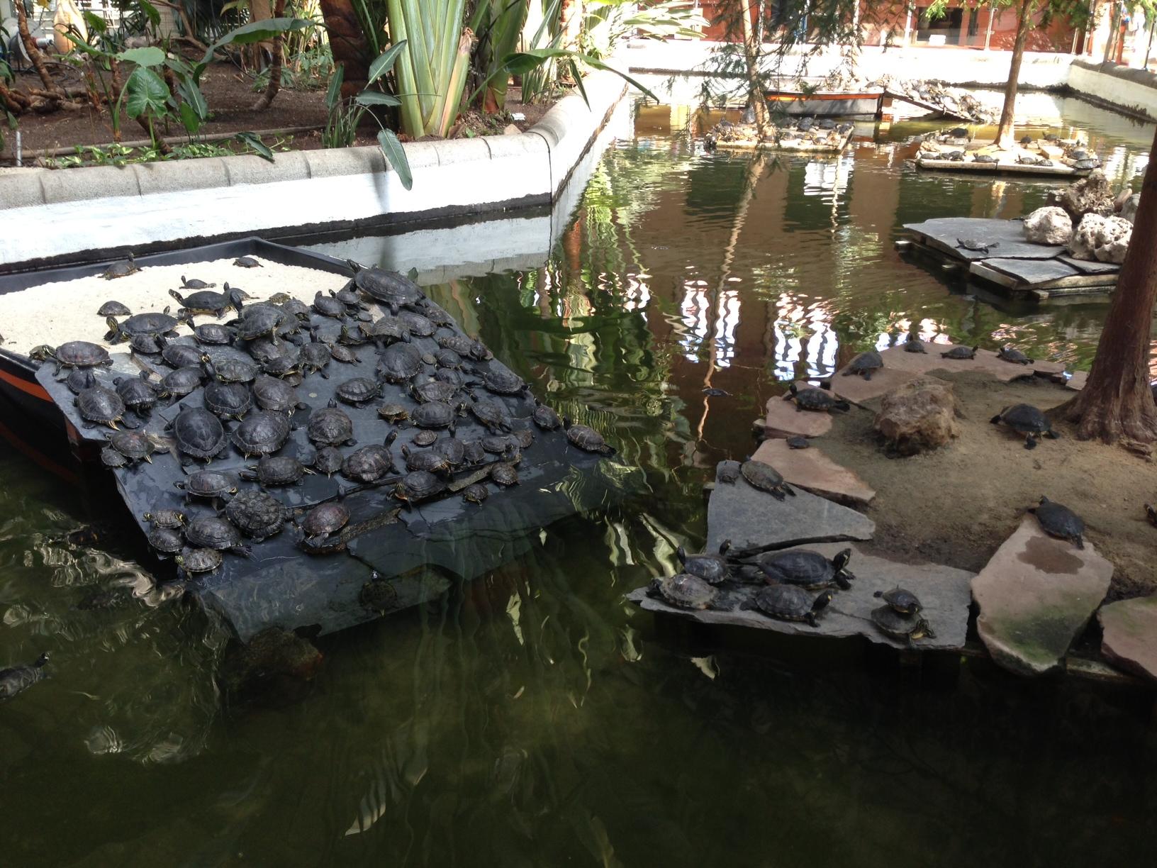 2012-12-04-turtle2.JPG