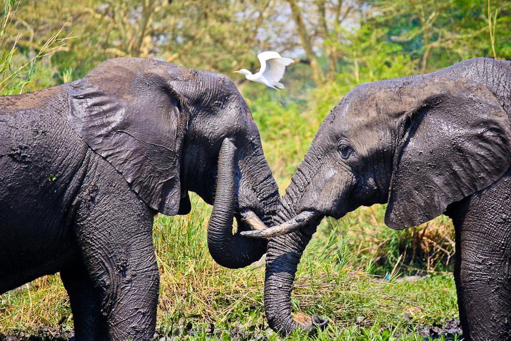 2012-12-06-ElephantsandDove.jpg