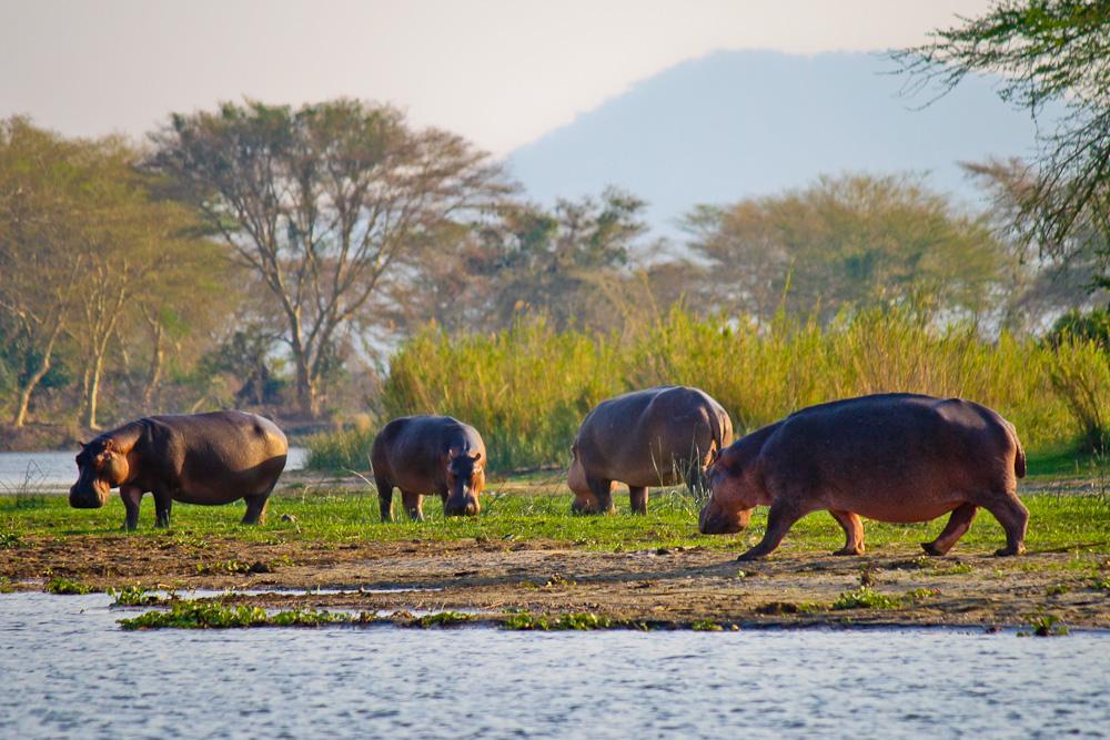 2012-12-06-Hipposonbank.jpg