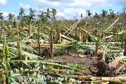 2012-12-10-damagedbananaplantations.jpg