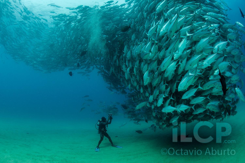 2012-12-13-CaboPulmo_NatGeo2012_OctavioAburto.jpg