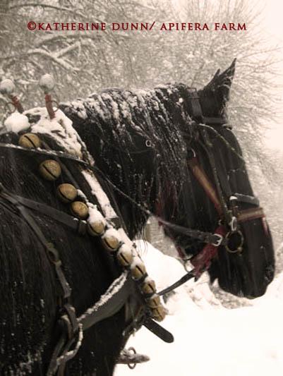 2012-12-13-horse.jpg