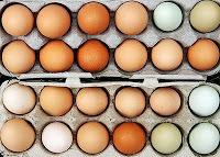 2012-12-14-eggs.jpg
