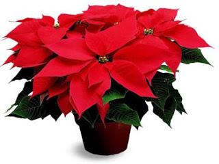 2012-12-15-plant.jpg