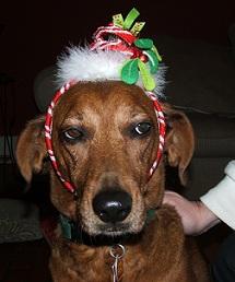 2012-12-15-xmasdog.jpg