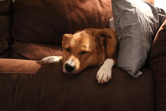 2012-12-17-Daisy1.JPG