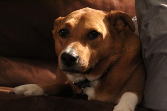 2012-12-17-Daisy3.JPG
