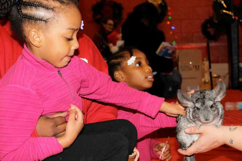 2012-12-18-Chinchilla.jpg