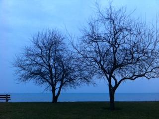 2012-12-19-trees.JPG