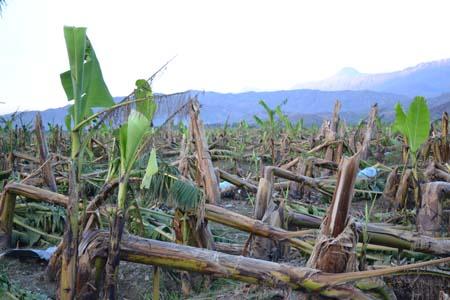 2012-12-22-bananaDSC_0968.jpg