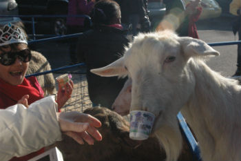 2012-12-24-Goatwithcup.jpg