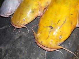 2012-12-28-yellowcats.jpg