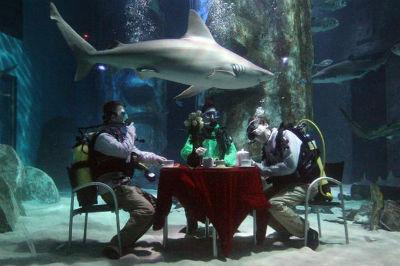 2012-12-30-shark.jpg