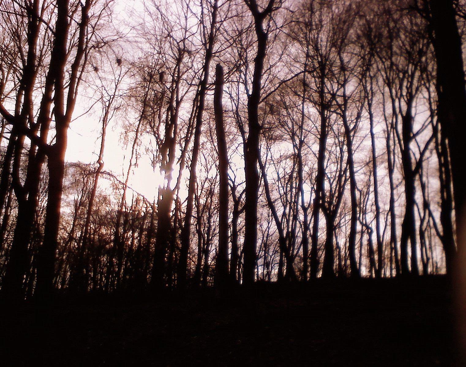 2013-01-01-huffpowoods.jpg