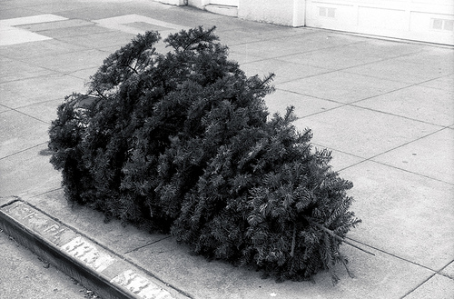 2013-01-07-deadchristmastree.jpg