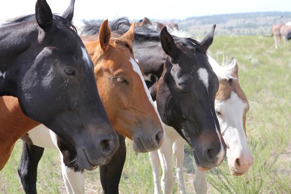 2013-01-07-kmc1213-horses-RunningWildHorses4600.jpg