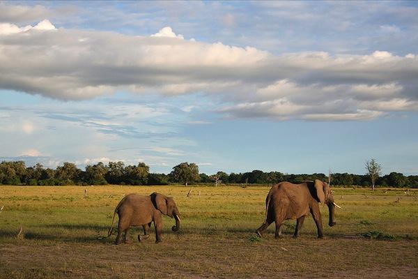 2013-01-09-ElephantsHodson.jpg