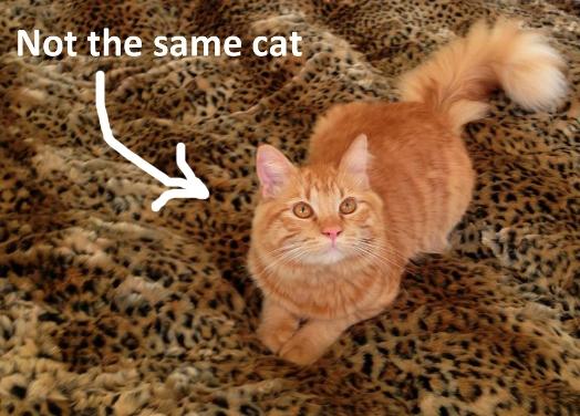2013-01-09-Gabbysfuckingcat.jpg
