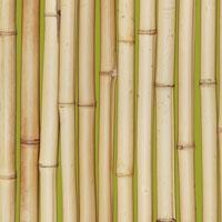 2013-01-10-bamboo_green_200.jpg