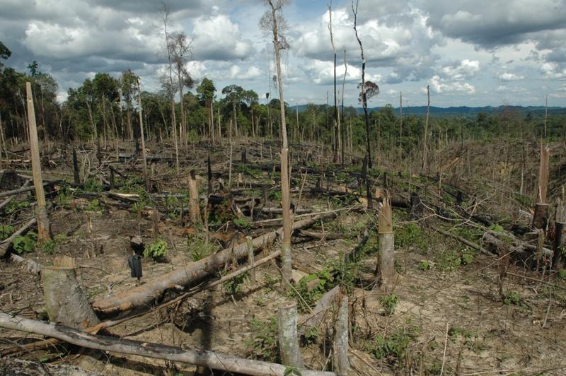 2013-01-15-CopyofPalmOilandOrangutansDeforestation.JPG
