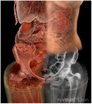 the anatomy of the heart essay