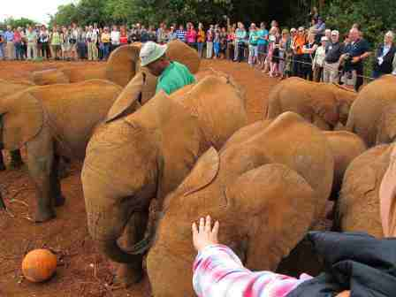 2013-01-29-ElephantsOrphanedbyPoaching.JPG